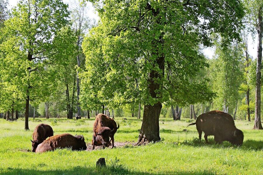 Приокско-Террасный биосферный резерват