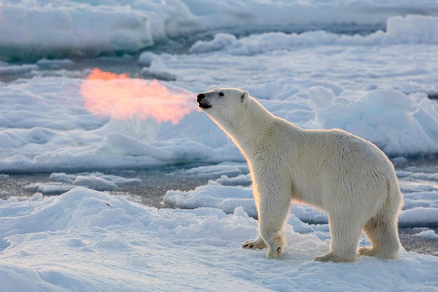 Места обитания белого медведя в Арктике